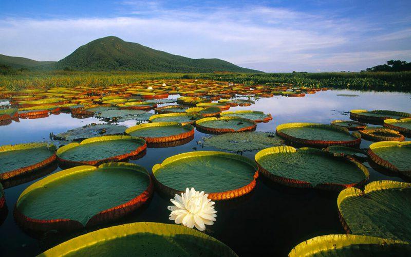 Turismo no pantanal: o guia completo para viver essa aventura